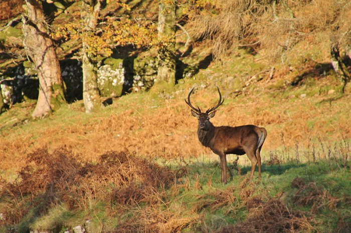 Stalking at Drimnin