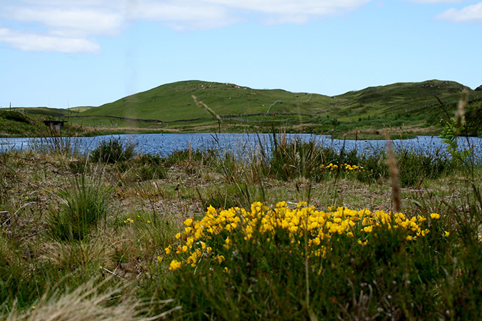 Lochan na Buik